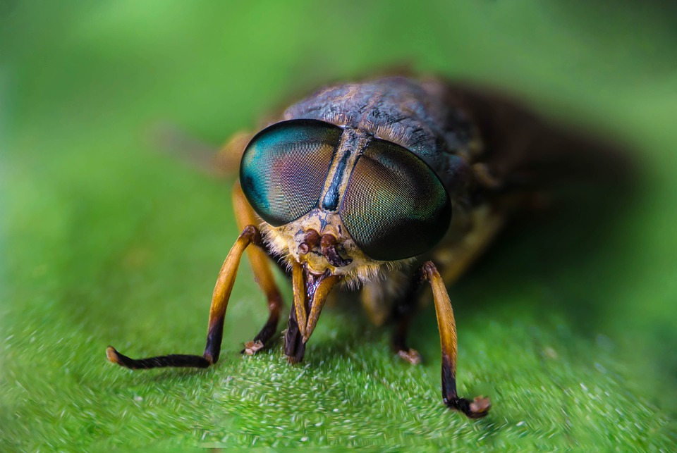 insect-3329048_960_720